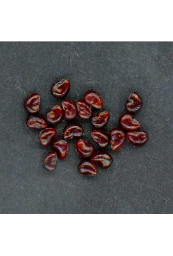 Ferocactus Mix 30 Semillas