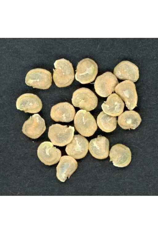 Opuntia ficus-indica fruto rojo 20 Semillas
